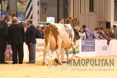 UK Livestock Event Ayrshire 15