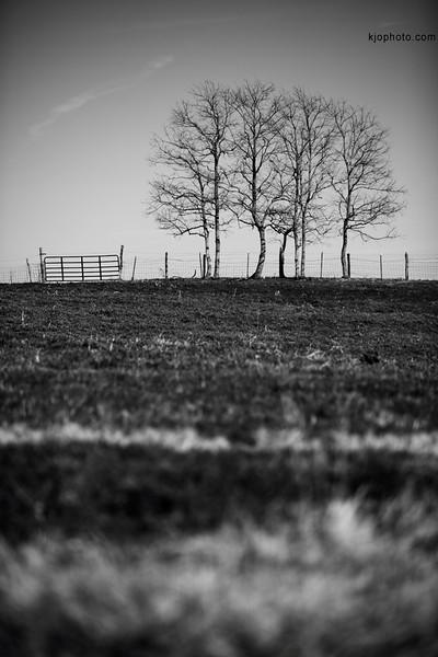 seven_tree_hill.jpg