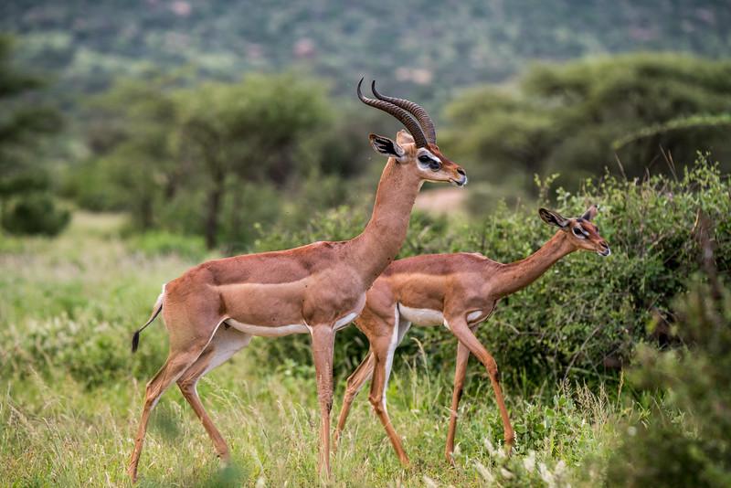 Samburu (54 of 70).jpg