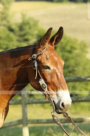 Mountain Mule Rescue-