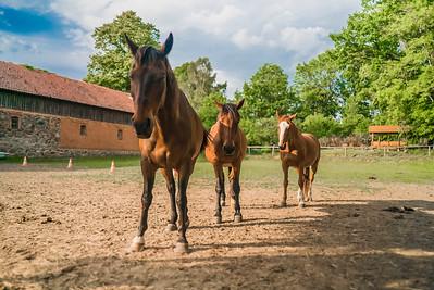 Stajnia, konie, pastwisko
