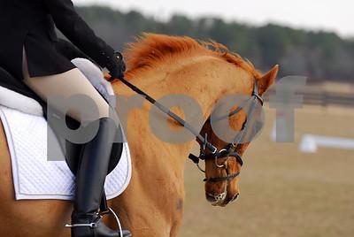 2009-02-11 USEA Horse Trial