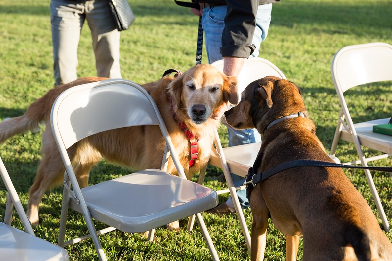 Blessing of the animals 10-3-2017 (45).jpg