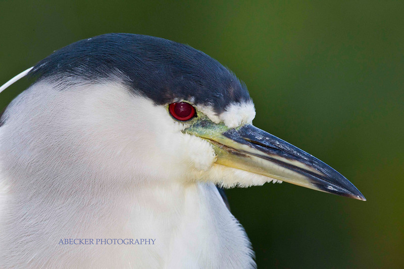 Bird portrait.jpg