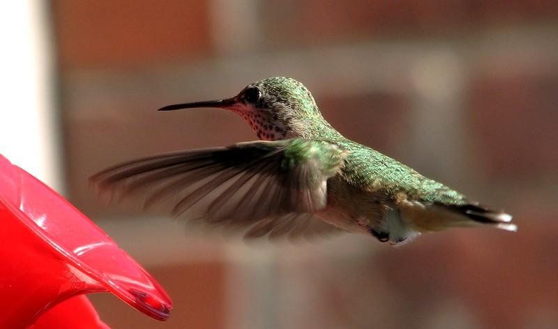 birds (155).jpg