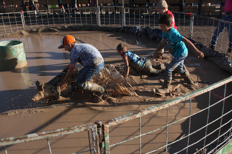 Havre Daily News / Floyd Brandt  Pig Wrestling at Blain County Fair Sunday team Clear Creek Angus