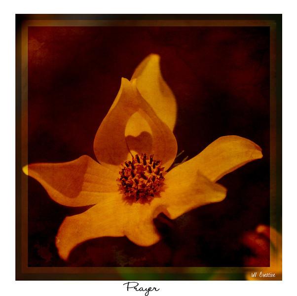 Prayer Flower.jpg