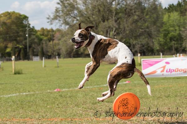 _MG_3361Up_dog_International_2016_StephaniellenPhotography.jpg