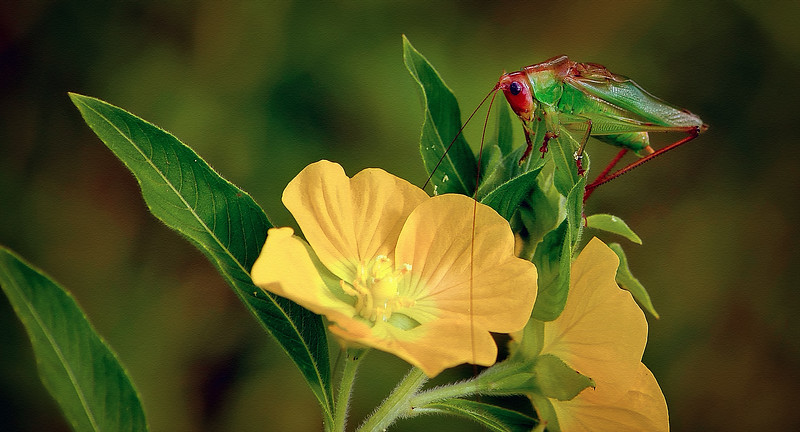 Photography of Bugs by Ray Bilcliff - www.trueportraits.com