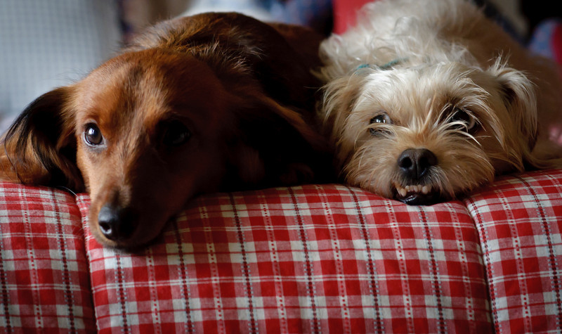 Teddy and Walter-9664.jpg