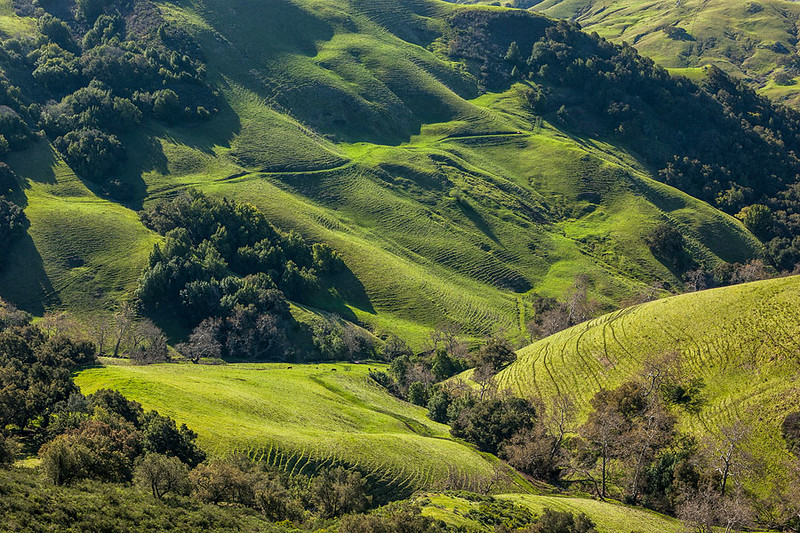 Green California Coastal Hills.jpg