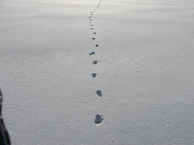 20080302 Coyote Tracks