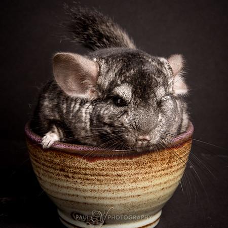 Unique Pets Photo Story
