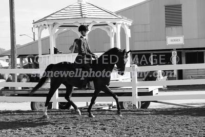 Saddleseat 2012