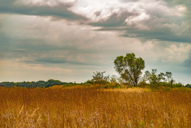 Prairie  54