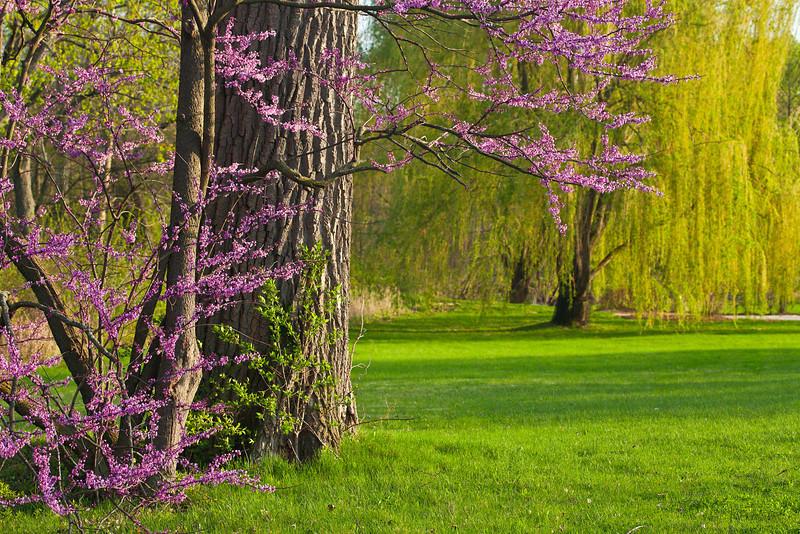 Spring12-1368-Edit copy.jpg
