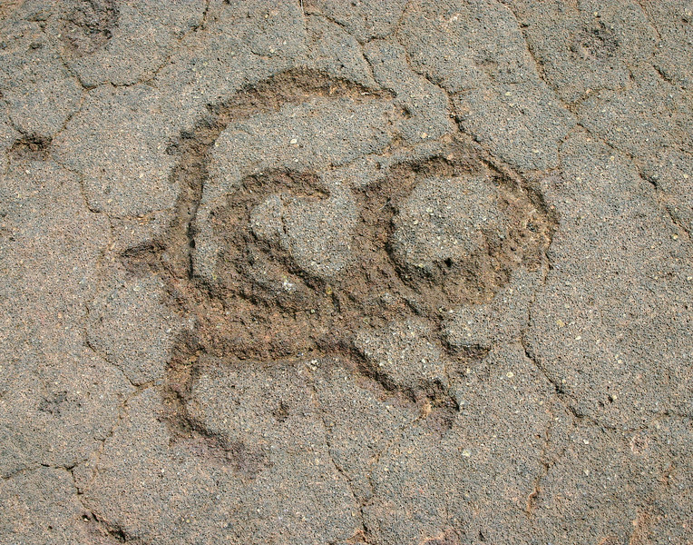 Petroglyph scorpion