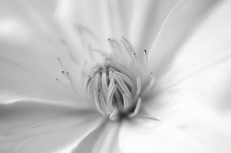 White Opening