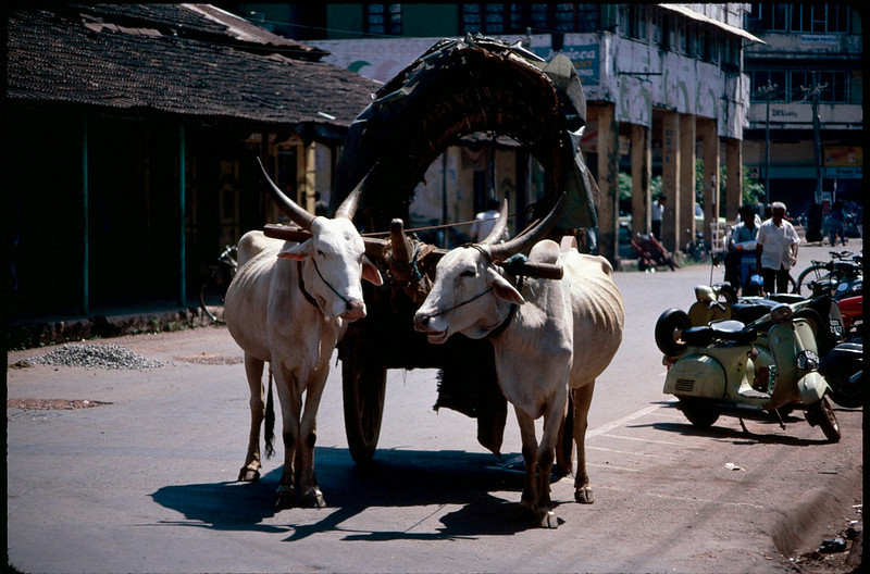 India1_020.jpg