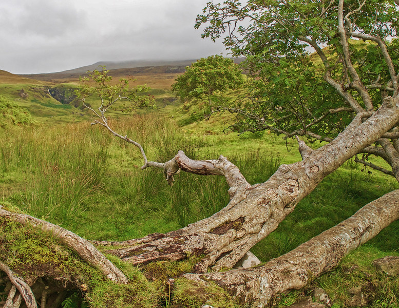 The Fairy Glen - Isle of Skye