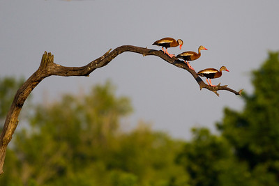 Brazos Bend State Park 6-24-2012