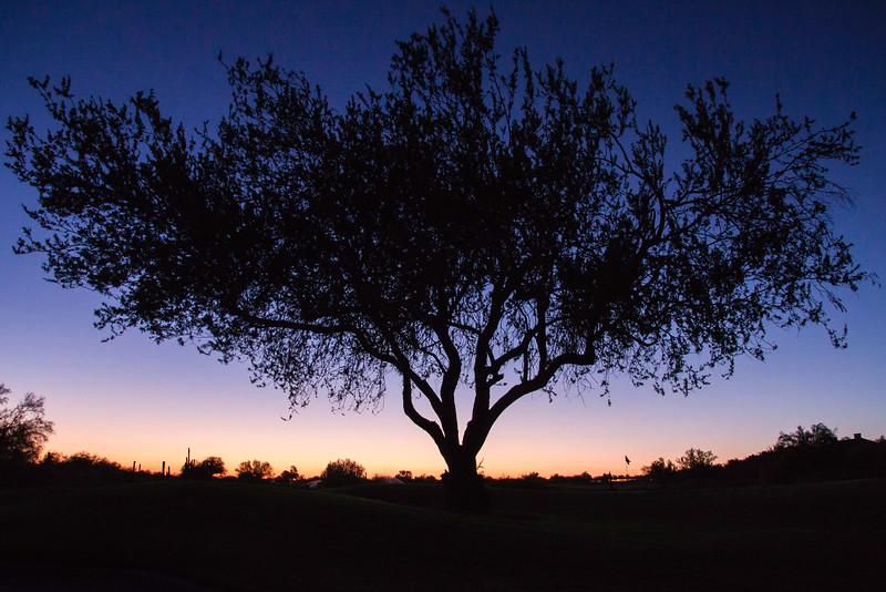 Palo Silhouette.jpg