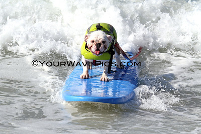 Surf City Surf Dog  surf contest 9/30/12