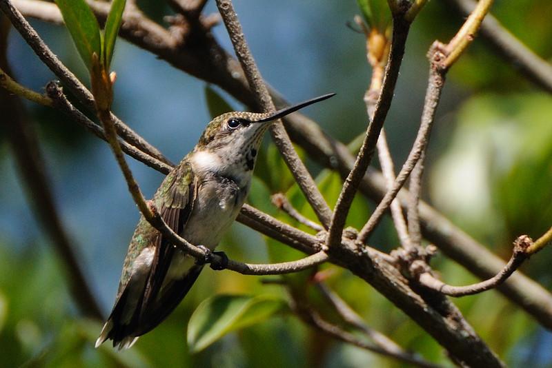 Again, I'm in hummingbird heaven.