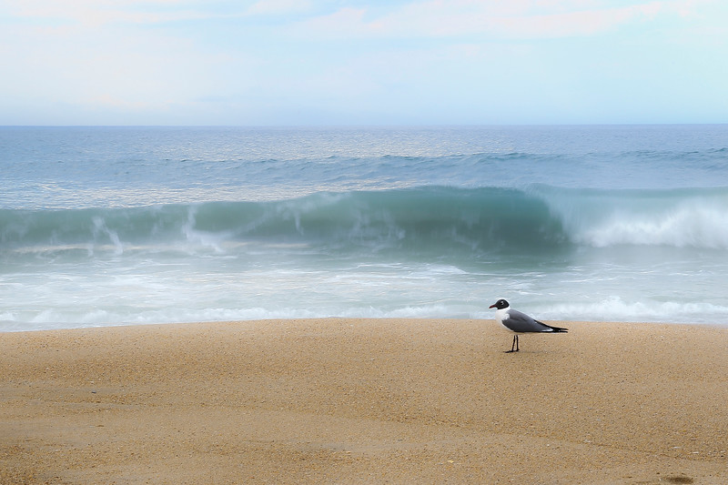 gull on the beach-.jpg