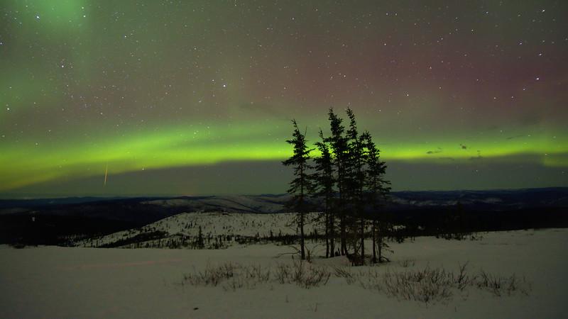Spruce, Aurora, and Meteor