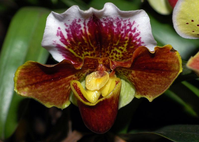 Orquidea 5.jpg