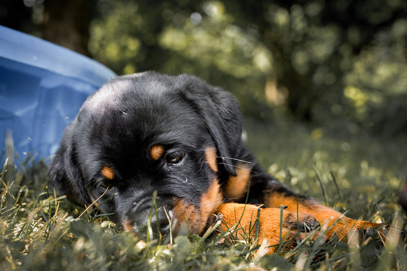 Pup1039.jpg