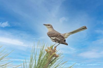 Birds of Gardens and Woodlands