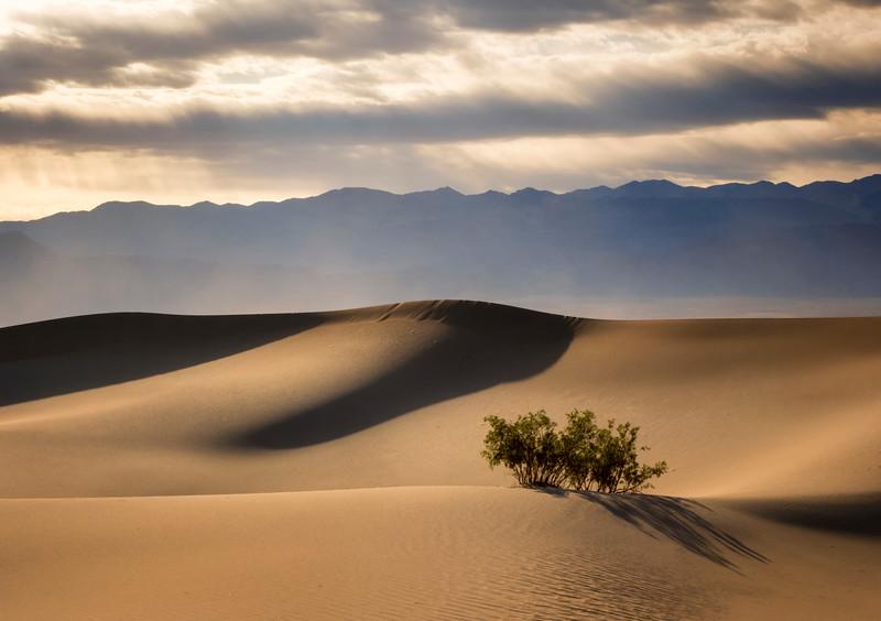 Mesquite dunes1.jpg