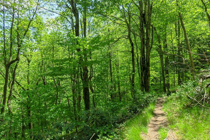 Mountains-to-Sea Trail -- 4,600'