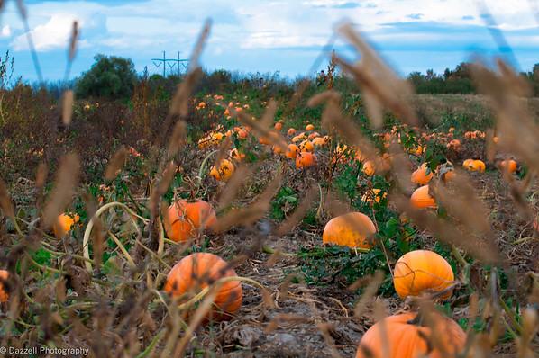 Pumpkin Picking!