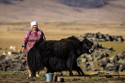 Mongolians live very closely with their animals.
