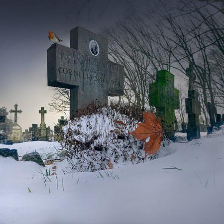Fine Art architectuur foto van het oude kerkhof te Nistelrode aan de Parkstraat met de oude kruizen en kruisbeelden met op een kruisbeeld een roodborstje en een weg gewaaid esdoorblad in de sneeuw.