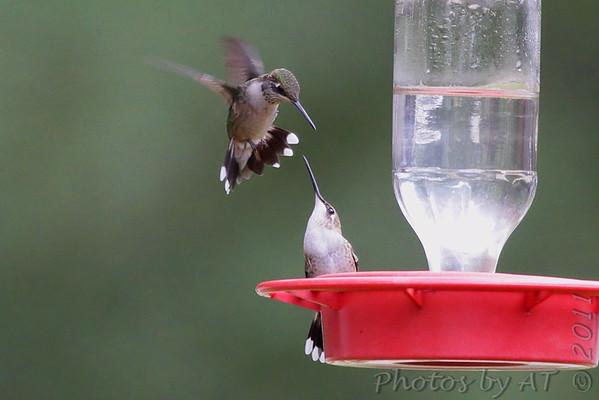 """2011 """"September"""" Yardbirds"""