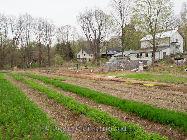 Long Spoon Farm