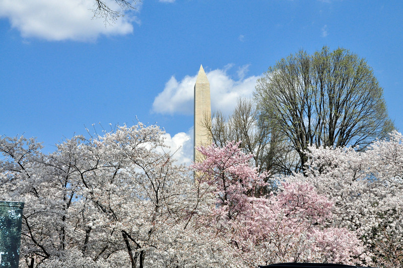 Cherry Blossoms 2014 117.jpg