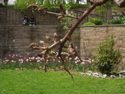 Cherry Blossom festival Bk Botanic Garden