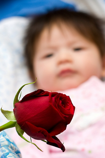Julia looking at Darcie's rose