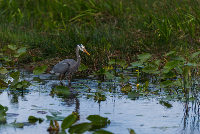 Everglades (31 of 60).jpg