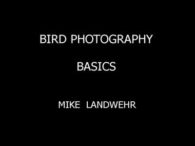 Bird Photography Basics