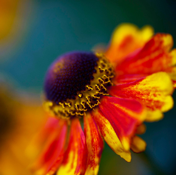 Composite with fabulous colours - amazing light, amazing flowers!