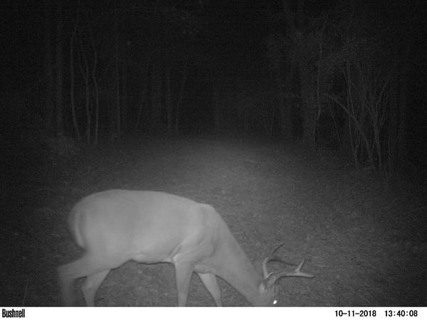 2018 house deer