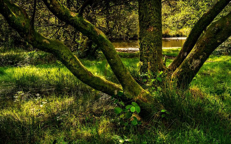 Forest Shadows-171.jpg
