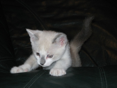 2006, Pics of Mia (Kitty)