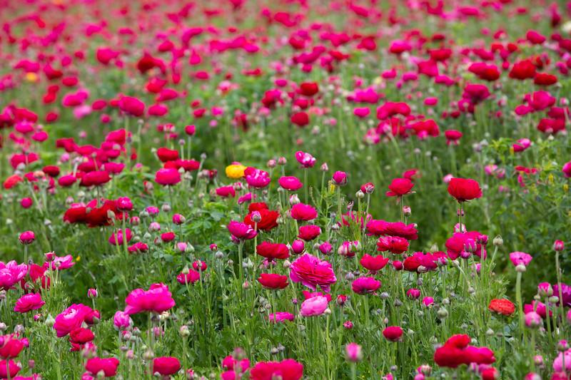Spring Flowers B-331.jpg